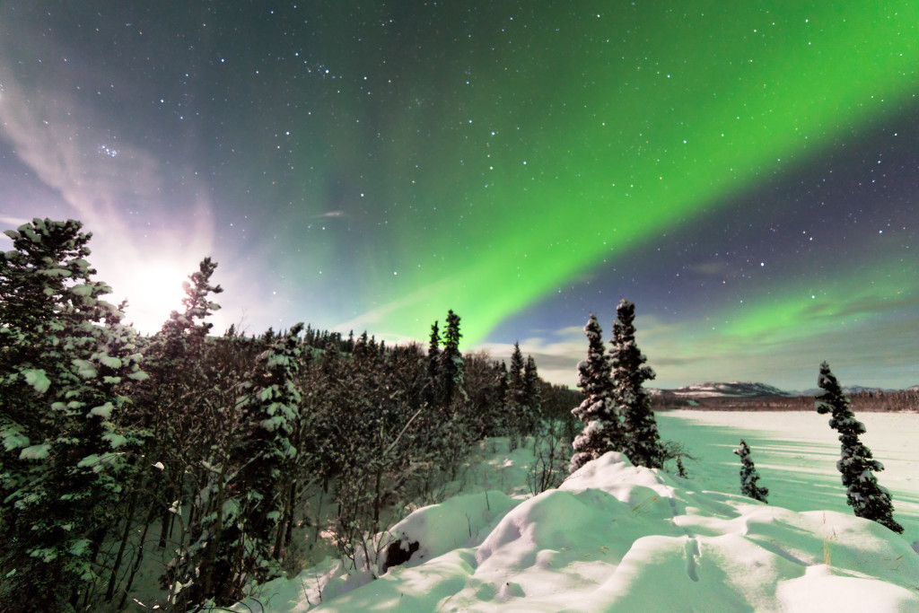 Spectacular display of intense Northern Lights or Aurora borealis or polar lights forming green swirls and moon behind ice fogs over snowy winter taiga landscape of Yukon Territory Canada