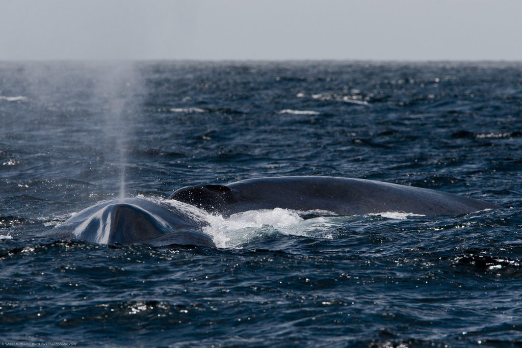 Na Lapônia finlandesa, alguns acreditavam que as luzes eram criadas pela espuma de água ejetada pelas baleias