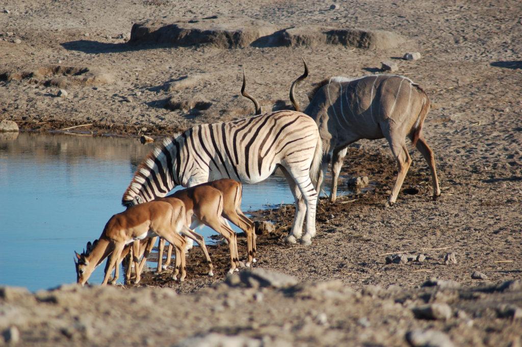 Zebras são apenas alguns dos animais que podem ser vistos nesse parque